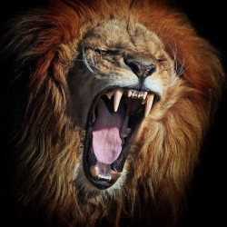 avatar lion64