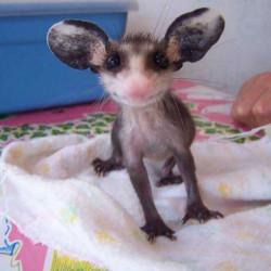 avatar Opossumstanco