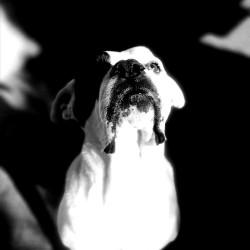 avatar JohnDoe